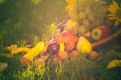 Luz completa de la puesta del sol de la hierba de las frutas de la cesta Fotografía de archivo libre de regalías