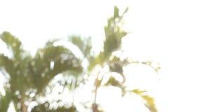 Luz con la hoja de la palmera