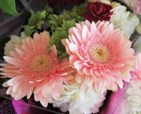 Luz consideravelmente brilhante & atrativa - Gerbera cor-de-rosa Daisy Flower Bouquet imagem de stock