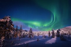 Luz da Aurora no céu acima da floresta do inverno fotos de stock royalty free