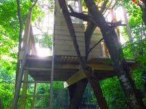 Luz da casa na árvore Fotos de Stock Royalty Free