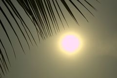 Luz da elevação de Sun com folhas do coco Fotos de Stock Royalty Free