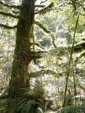 Luz da floresta Imagens de Stock