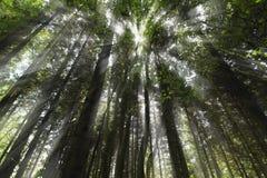 Luz da floresta Fotografia de Stock Royalty Free