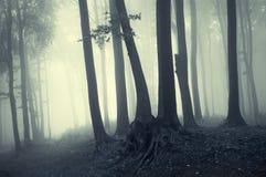 Luz da manhã em uma floresta enevoada Fotografia de Stock