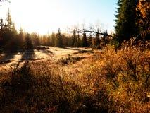 Luz da manhã na floresta Imagens de Stock