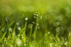 Luz da manhã nas lâminas de grama Imagem de Stock Royalty Free