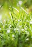 Luz da manhã nas lâminas de grama Imagem de Stock