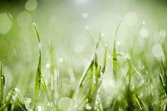 Luz da manhã nas lâminas de grama Foto de Stock
