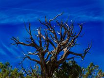 Luz da mola em Gray Lifeless Tree fotos de stock
