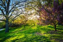 Luz da noite em árvores coloridas no parque do monte da druida, Baltimore, M fotos de stock