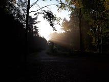Luz da sombra Fotos de Stock Royalty Free