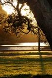 Luz da tarde Fotografia de Stock Royalty Free