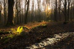 Luz Dappled en el bosque Foto de archivo libre de regalías
