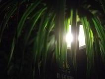 A luz das folhas verdes fotografia de stock