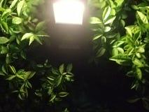 A luz das folhas verdes fotos de stock