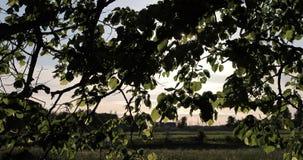 Luz das rupturas do sol através dos ramos das árvores no verão video estoque