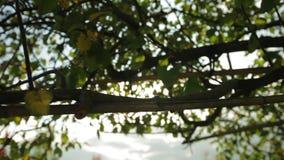 Luz de Bokeh a través de las hojas almacen de metraje de vídeo