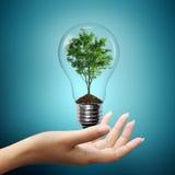 Luz de bulbo con el árbol adentro en la mano de la mujer Fotos de archivo libres de regalías