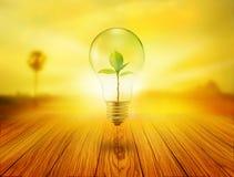 Luz de bulbo con el árbol verde dentro en de madera en la salida del sol, concepto del ambiente Imagen de archivo libre de regalías