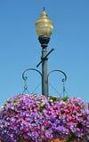 Luz de calle con las cestas de la flor de la petunia de la ejecución Fotografía de archivo