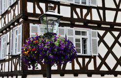 Luz de calle con las flores Fotografía de archivo libre de regalías