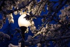 Luz de calle vista a través de ramas de árbol nevadas Fotos de archivo libres de regalías