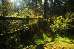 Luz de cegueira da manhã Imagens de Stock Royalty Free