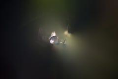 Luz de descenso del agua en túnel fotos de archivo libres de regalías