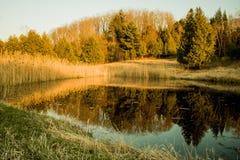 Luz de Forest Pond In Late Day fotos de stock