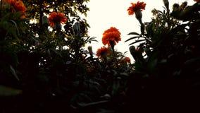Luz de la flor y de Sun Imagen de archivo