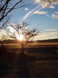 Luz de la mañana fotografía de archivo libre de regalías