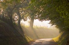 Luz de la mañana Imagenes de archivo