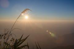 Luz de la mañana de la hierba Imagen de archivo