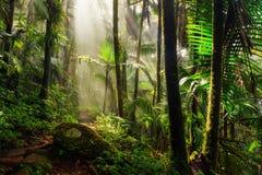 Luz de la mañana del EL Yunque Foto de archivo