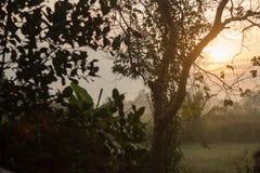 Luz de la mañana del paso del sol a través del árbol en cámara con la hoja Imagen de archivo