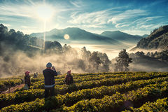 Luz de la mañana en Doi Angkhang Foto de archivo libre de regalías