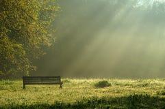 Luz de la mañana en el parque Imágenes de archivo libres de regalías