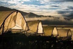Luz de la mañana en la granja de la uva Fotos de archivo