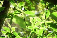 Luz de la mañana en la selva Imágenes de archivo libres de regalías