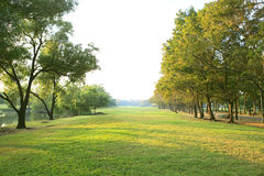 Luz de la mañana en parque público con el campo de hierba verde de la planta del árbol u Fotografía de archivo libre de regalías