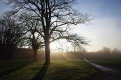 Luz de la mañana a través de la niebla Foto de archivo libre de regalías