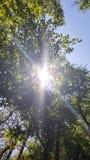 Luz de la naturaleza Fotografía de archivo libre de regalías