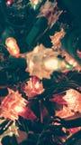 Luz de la Navidad Imágenes de archivo libres de regalías