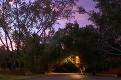 Luz de la noche de los árboles imagenes de archivo