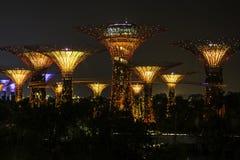 Luz de la noche en el jardín de flores en el jardín por la bahía en Singapur Imagenes de archivo