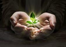 Luz de la planta en las manos fotos de archivo