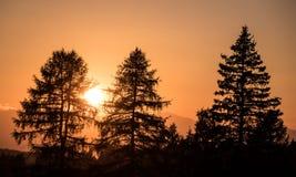 Luz de la puesta del sol con la silueta de los árboles de pino Foto de archivo