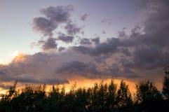 Luz de la puesta del sol detr?s de algunos ?rboles de la mimosa imagen de archivo