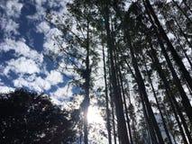 Luz de la selva del ojo Foto de archivo libre de regalías